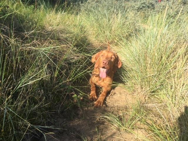 mr-s-dog-on-beach